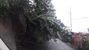 Pohon tumbang menghalangi jalan utama di Teling tingkulu