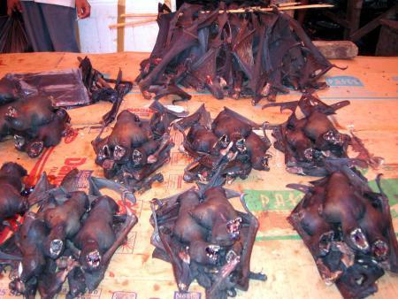 Anjing, tikus, dan kelelawar menu favorit orang Minahasa.