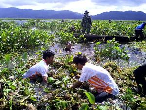 Bersih-Bersih Danau Tondano Dari Eceng Gondok