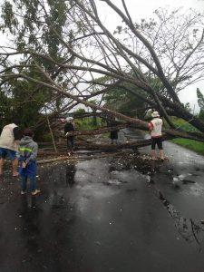 Pohon tumbang di jalan raya Tondano