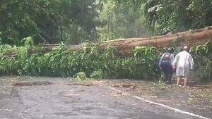 Pohon tumbang di jalan raya Tinoor mengakibatkan salah seorang pengguna jalan terjebak