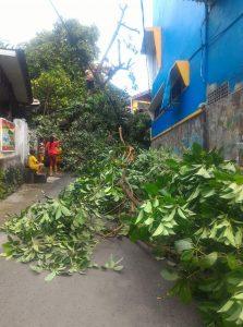 Tiang listrik patah akibat pohon tumbang