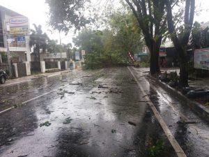 Pohon tumbang di jalan samrat