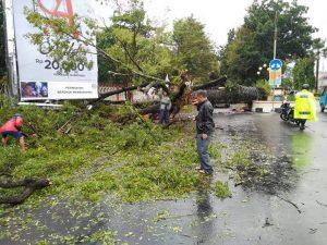 Pohon tumbang di jalan sario menutupi seluruh badan jalan utama