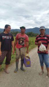 Kelompok ternak bebek toronata
