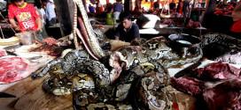 Pasar Tomohon, Pasar Ekstrim di Manado