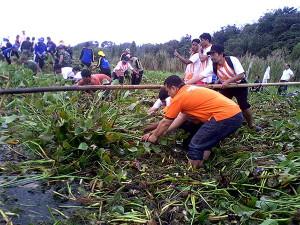 Pembersihan Eceng Gondok di Danau Tondano