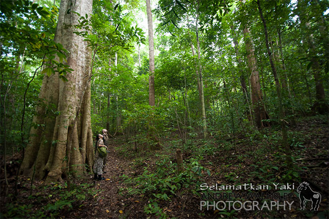 Rainforest Live, Foto: selamatkanyaki.com