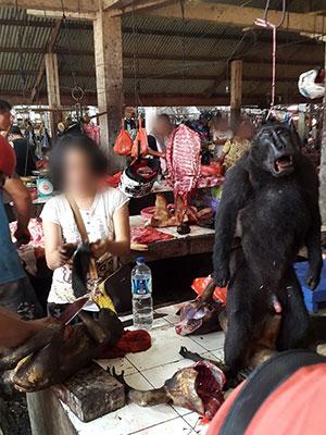 Yaki adalah monyet sangat terancam namun masih dapat ditemukan di pasar-pasar di Sulawesi Utara, seperti yang tampak di pasar Tomohon | Foto: Selamatkan Yaki