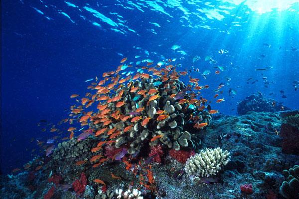 foto terumbu karang di taman laut bunaken